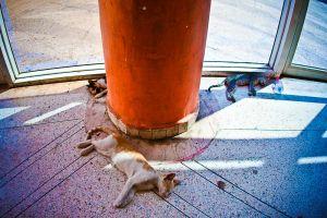stefano-majno-morocco-crossing-agadir-bus-station-dead-cats.jpg