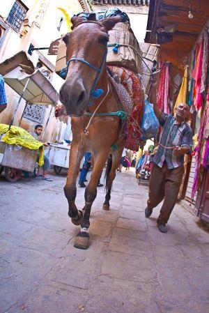 stefano-majno-morocco-crossing-fez-donkey-souk.jpg
