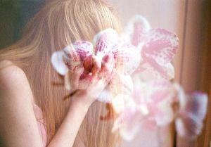 stefano majno orchid girl