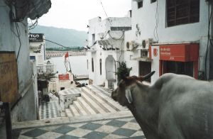 stefano majno india rajasthan asia analogue film camera pushkar cow ghat.jpg