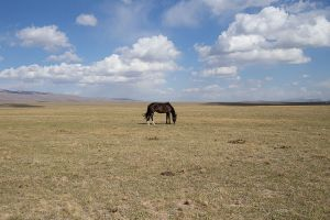 stefano majno black horse solitary tien shan plateaukirghizistan