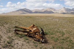 stefano majno dead cow tien shan panorama kirghizistan