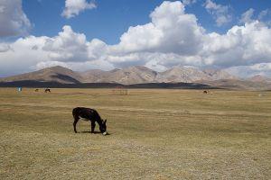 stefano majno donkey kirghizistan clouds tien shan