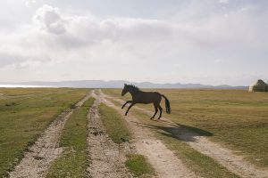 stefano majno horse panorama