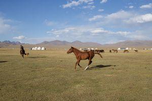 stefano majno horse rinding tien shan