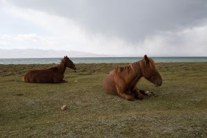 stefano majno horses song kol kirghizistan