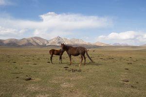 stefano majno tien shan horses