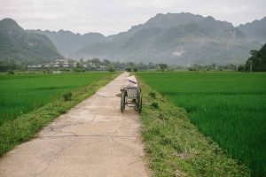 mai chau rice plant old woman asia south east vietnam stefano majno-c59.jpg